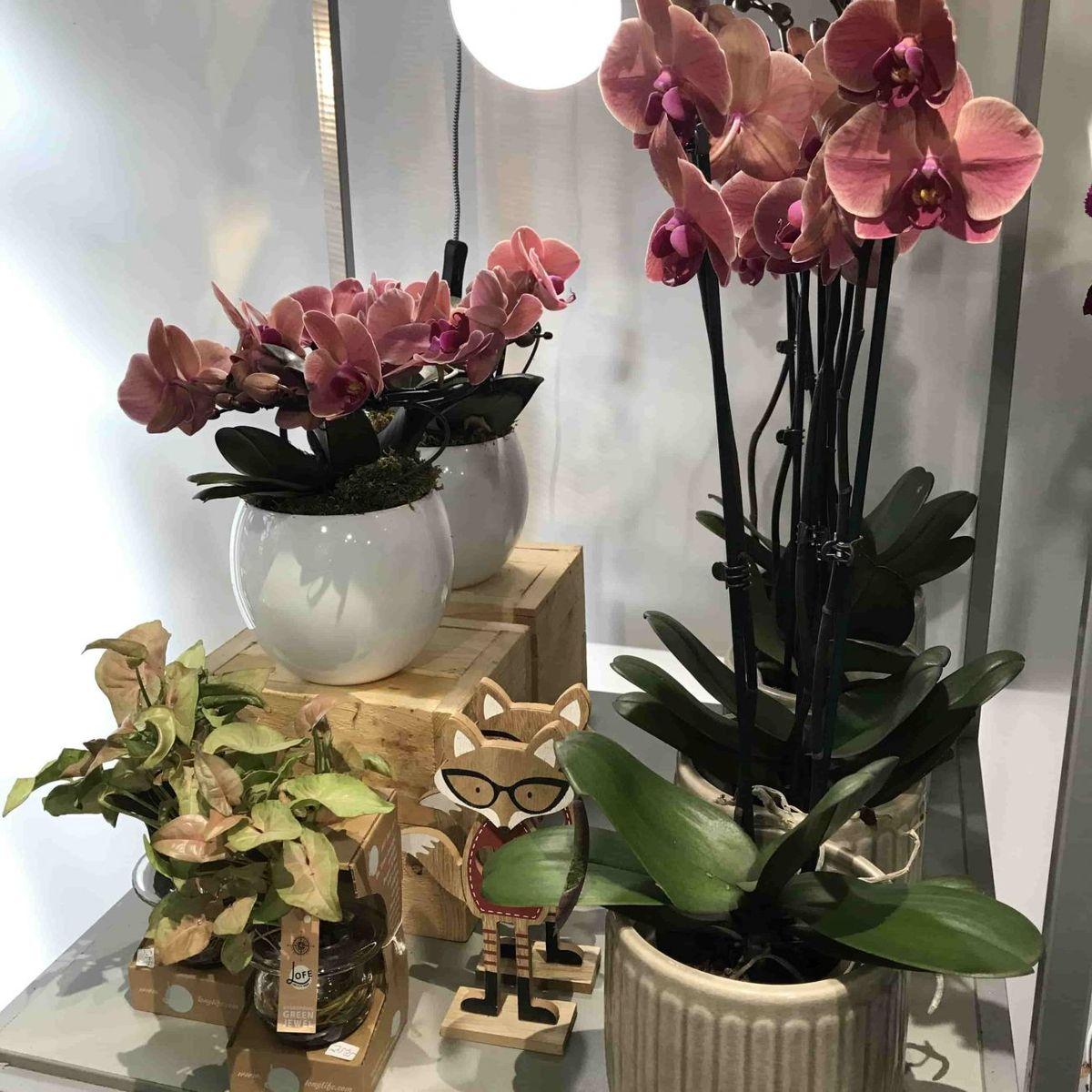 Floristería en Bilbao y envío de flores a domicilio