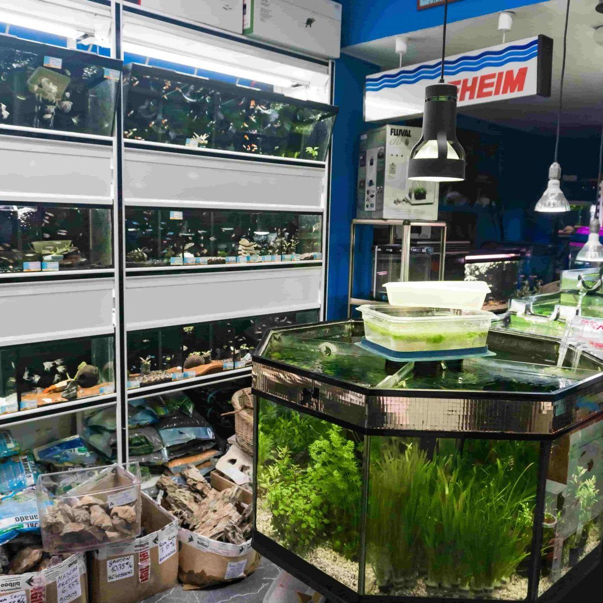 Tienda especializada en acuarios y peces tropicales