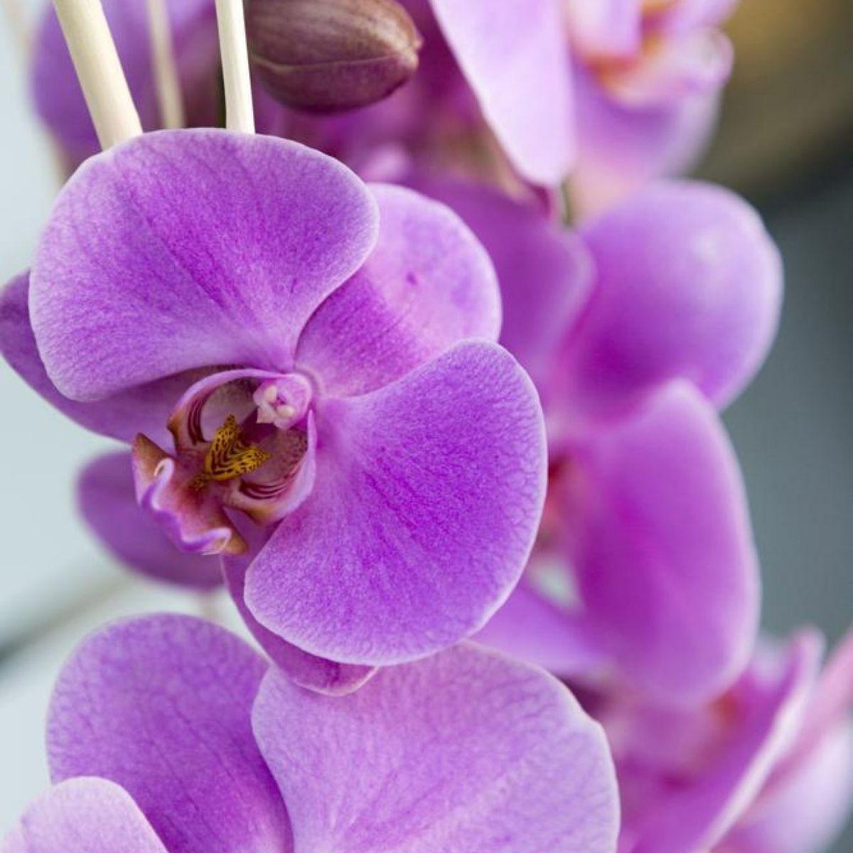 4494-flores-rementeria-05