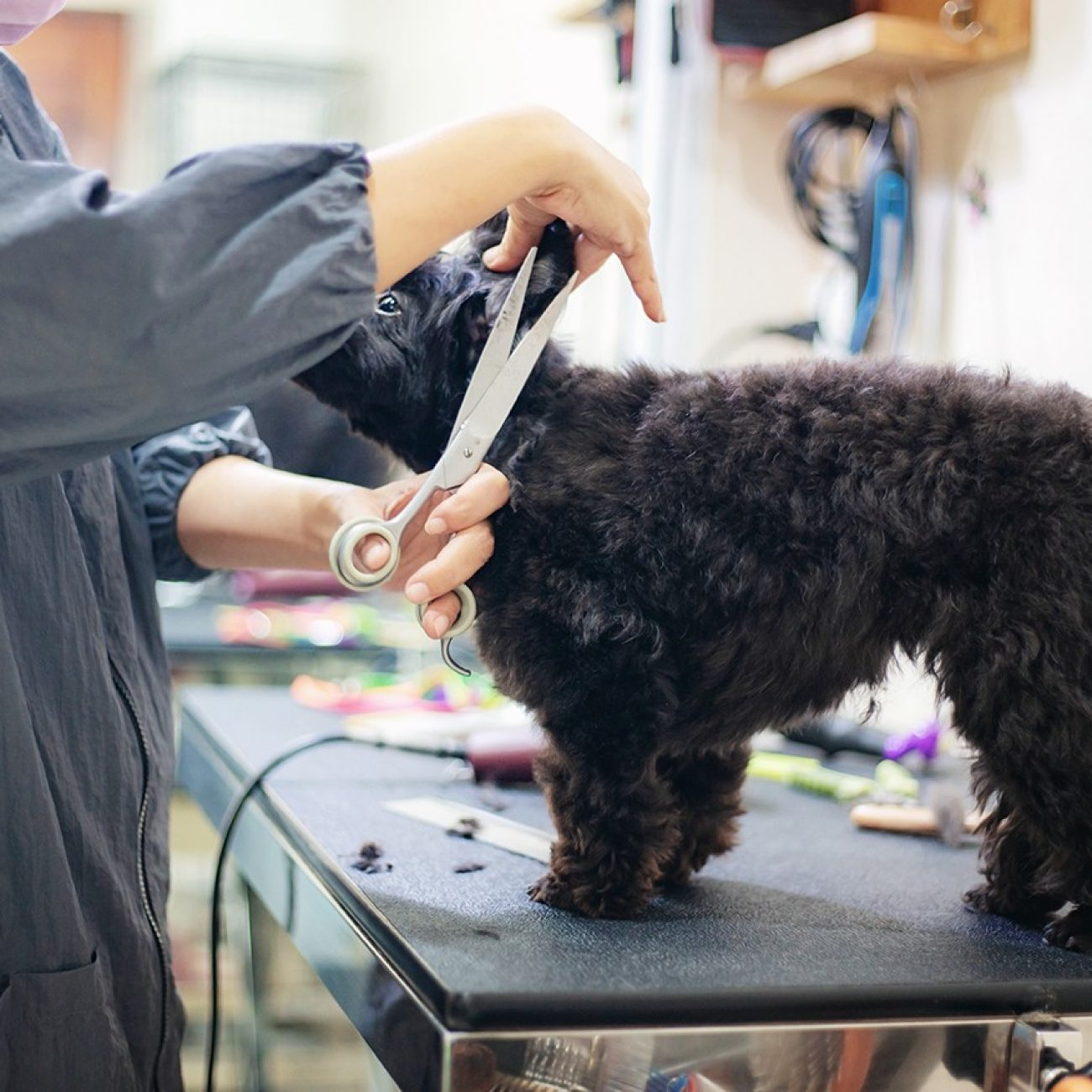 Woman are cutting hair and cleanning a dog in pet shop.